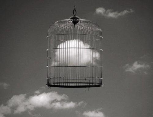 La sofferenza dell'uccello