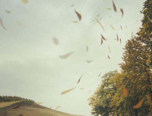 Ospito questa settimana le poesie di Fabio Strinati e la loro traduzione in catalano