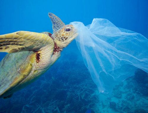 L'industria della plastica al contrattacco